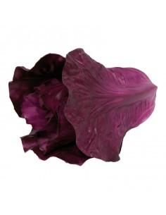 Réplica de Imitación Lechuga romana violeta  16x18cm