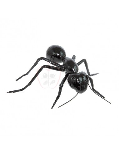 Réplica de Imitación Hormiga negra  15x10cm